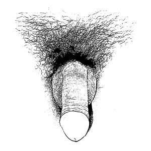 600px-Sketch_of_a_flaccid_penis